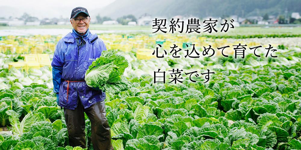 契約農家が心を込めて育てた白菜です